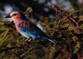 Un bel oiseau