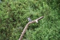 Nombreuses espèces d'oiseaux différents
