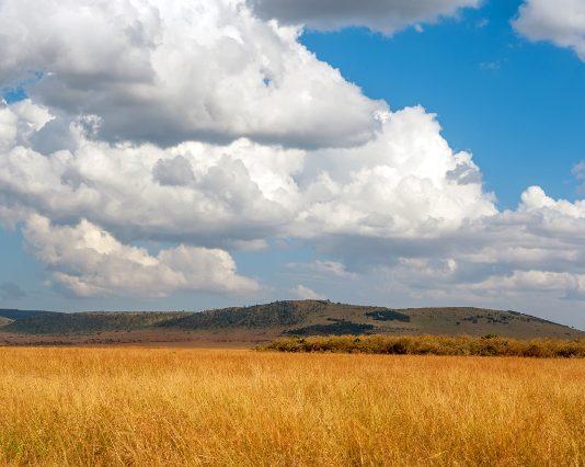 Savane dans le parc national du Kenya