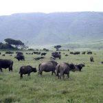 Au coeur même de Ngorongoro