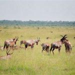 D'innombrables espèces sont présentes dans le Ngorongoro !