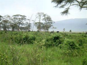 Eléphants au loin