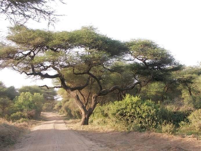 Le parc de Manyara