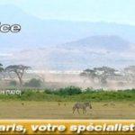 Multichoice, spécialiste du safari