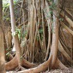 De la nature et des arbres,
