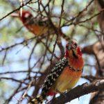 Des oiseaux en nombre