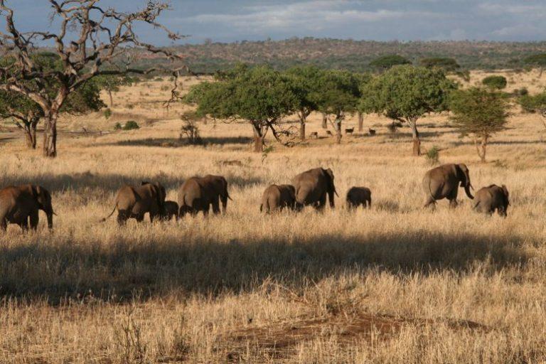 E Unoto Retreat, Safari matinal