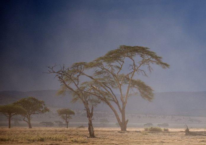Paysage du Serengeti