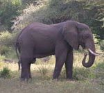 Manyara
