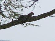 Regardez sur la branche !