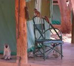 Voyager Safari Camp