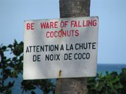 Chute de noix de coco
