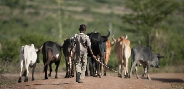 Respectez la façon de vivre des Tanzaniens ou des kenyans