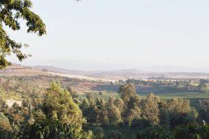 Plantations, hautes terres