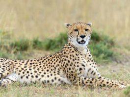Les prestataires du Kenya