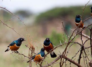 Des oiseaux...